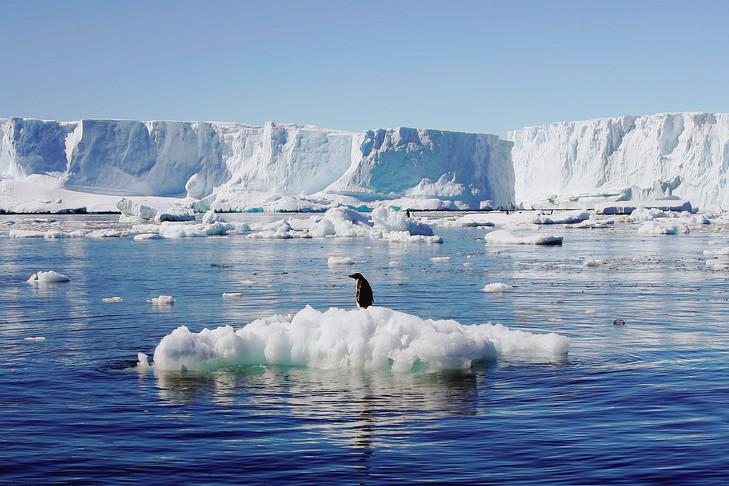 vingt-lAntarctique-perdu-3-000-milliards-tonnes-glace-selon-calculs-84-scientifiques-parus-Nature-quelques-jours-1_0_729_486.jpg